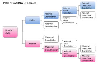 dna 6 - 600px-female_dna_paths